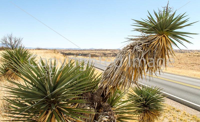 Scenery along AZ Hwys 83 & 82 near Sonoita & Patagonia - D2-C3-0212 - 72 ppi