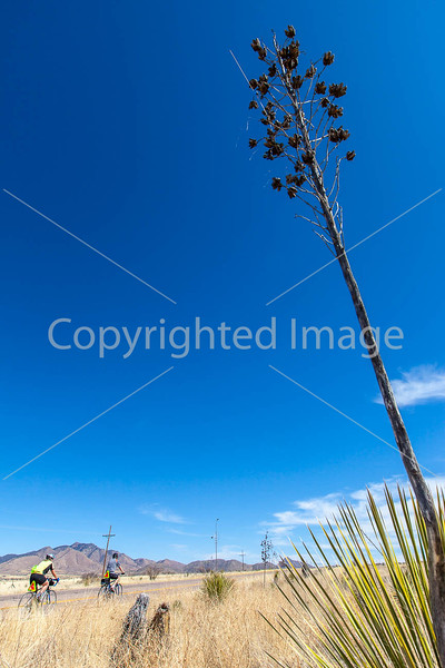 ACA -  Near Upper Elgin Rd & Hwy 82, Arizona - D3-C2-0108 - 72 ppi