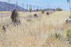 ACA -  Hwy 82 between Sonoita & Tombstone, Arizona - D3-C1-0128 - 72 ppi