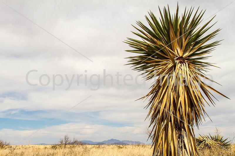 Scenery along AZ Hwys 83 & 82 near Sonoita & Patagonia - D2-C3-0208 - 72 ppi