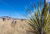 ACA -  Near Upper Elgin Rd & Hwy 82, Arizona - D3-C2-0113 - 72 ppi