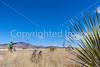 ACA -  Near Upper Elgin Rd & Hwy 82, Arizona - D3-C2-0117 - 72 ppi