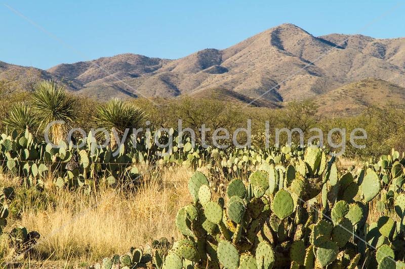 Scenery along AZ Hwys 83 & 82 near Sonoita & Patagonia - D2-C3-0002 - 72 ppi