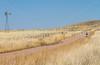 ACA - North of Elgin, Arizona, toward  Hwy 82 - D3-C3#1-0234 - 72 ppi