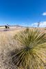 ACA -  Near Upper Elgin Rd & Hwy 82, Arizona - D3-C2-0121 - 72 ppi