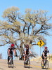 ACA -  Cyclists near Elgin, Arizona - D3-C1-0078 72 ppi