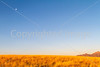 Arizona countryside near Sonoita - D3-C3#1-0027 - 72 ppi