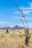ACA -  Near Upper Elgin Rd & Hwy 82, Arizona - D3-C1- - 72 ppi-7