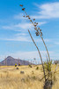 ACA -  Near Upper Elgin Rd & Hwy 82, Arizona - D3-C1-0101 - 72 ppi