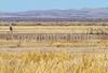 ACA - Whitewater Draw Wildlife Area near Bisbee, Arizona - D5-C1-0125 - 72 ppi