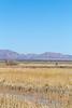 ACA - Whitewater Draw Wildlife Area near Bisbee, Arizona - D5-C1-0064 - 72 ppi