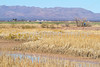ACA - Whitewater Draw Wildlife Area near Bisbee, Arizona - D5-C1-0066 - 72 ppi