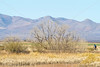ACA - Whitewater Draw Wildlife Area near Bisbee, Arizona - D5-C1-0070 - 72 ppi