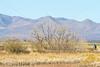 ACA - Whitewater Draw Wildlife Area near Bisbee, Arizona - D5-C1-0070 - 72 ppi