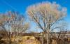 ACA - Rider(s) southwest of Tombstone, Arizona - D6-C3- - 72 ppi-3-2