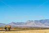ACA - Riders southwest of Bisbee, Arizona, on US 92 - D6-C1-0179 - 72 ppi
