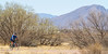 ACA - Whitewater Draw Wildlife Area near Bisbee, Arizona - D5-C1-0114 - 72 ppi