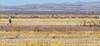 ACA - Whitewater Draw Wildlife Area near Bisbee, Arizona - D5-C1-0125 - 72 ppi-2