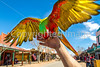 Macaw on Allen Street in Tombstone, Arizona - D6-C3-0530 - 72 ppi