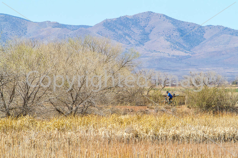 ACA - Whitewater Draw Wildlife Area near Bisbee, Arizona - D5-C1-0072 - 72 ppi