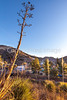 ACA - Cyclists and staff in camp in Bisbee, Arizona - D6-C2- - 72 ppi