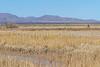 ACA - Whitewater Draw Wildlife Area near Bisbee, Arizona - D5-C1-0063 - 72 ppi
