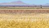 ACA - Whitewater Draw Wildlife Area near Bisbee, Arizona - D5-C1-0033 - 72 ppi