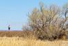 ACA - Whitewater Draw Wildlife Area near Bisbee, Arizona - D5-C1-0034 - 72 ppi