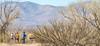ACA - Whitewater Draw Wildlife Area near Bisbee, Arizona - D5-C1-0085 - 72 ppi