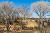 ACA - Rider(s) southwest of Tombstone, Arizona - D6-C3-0337 - 72 ppi