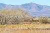 ACA - Whitewater Draw Wildlife Area near Bisbee, Arizona - D5-C1-0073 - 72 ppi
