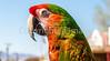Macaw on Allen Street in Tombstone, Arizona - D6-C3-0518 - 72 ppi