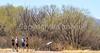 ACA - Whitewater Draw Wildlife Area near Bisbee, Arizona - D5-C1-0052 - 72 ppi