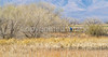 ACA - Whitewater Draw Wildlife Area near Bisbee, Arizona - D5-C1-0073 - 72 ppi-2
