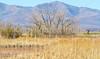 ACA - Whitewater Draw Wildlife Area near Bisbee, Arizona - D5-C1-0042 - 72 ppi