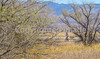 ACA - Whitewater Draw Wildlife Area near Bisbee, Arizona - D5-C1-0082 - 72 ppi