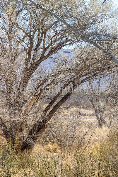 ACA - Rider(s) southwest of Tombstone, Arizona - D6-C3- - 72 ppi