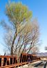 ACA - Rider(s) between Bisbee & Sierra Vista, Arizona - D6-C3-0275 - 72 ppi