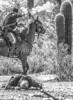 Battle of Picacho Peak - C1#2-0159-2 - 72 ppi-4