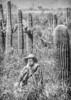 Battle of Picacho Peak - C1#1 -2 - 72 ppi