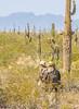 Battle of Picacho Peak - C1#1 -0130 - 72 ppi-2