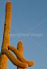 Saguaro National Park (west), AZ - D1-C3-0199 - 72 ppi