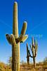Saguaro Nat'l Park (east), Arizona -  D8-C3-0024 - 72 ppi