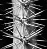 Barrel cactus close-up - 72 ppi