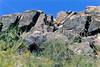 Saguaro National Park, Arizona - 27 - 72 ppi