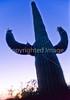 Saguaro National Park, Arizona - 16 - 72 ppi