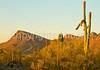 Saguaro National Park (west), AZ - D1-C3-0191 - 72 ppi