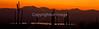 Saguaro National Park (west), AZ - D1-C3-0217 - 72 ppi-2
