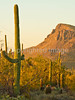 Saguaro National Park (west), AZ - D1-C3-0190 - 72 ppi