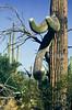 Saguaro National Park, Arizona - 31 - 72 ppi